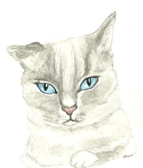 Pet Portraits - by me!